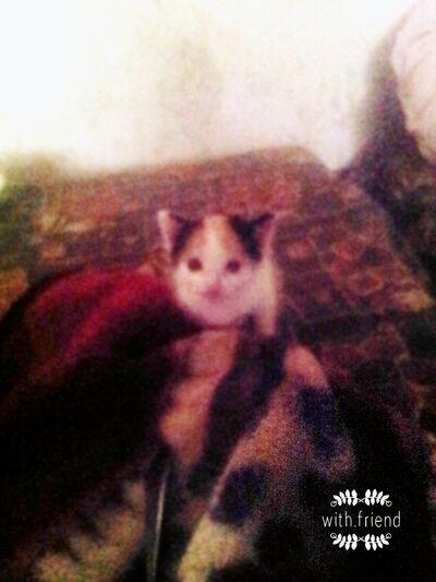 Фото мужчины миша, Астрахань, Россия, 25